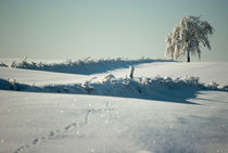 Cold winter by photogatar