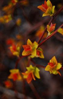 Autumn von Lina Shidlovskaya