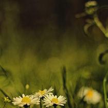 [das schöne in grenzen schafft neuen raum für geschichten |diffus]  by sommerpfuetze
