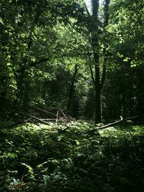 Trap for light. von Arseny Sigarev