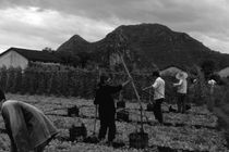 BW China Guilin watering with liquid manure 1970s von blackwhitephotos
