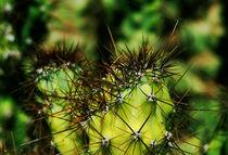 Cactus in spider web von Lina Shidlovskaya