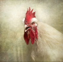 'Portrait of a chicken' von Pauline Fowler