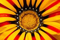 Centro de flor Mitte der blüte von Ricardo Anderson
