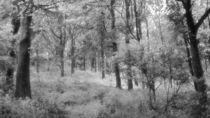 Platinum Forest von Sarah Couzens
