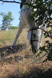 Horse von Denitsa Mihaylova