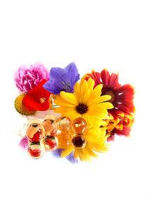 Sommerblumen von halina