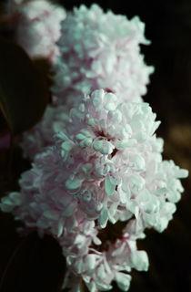 lilac by Lina Shidlovskaya