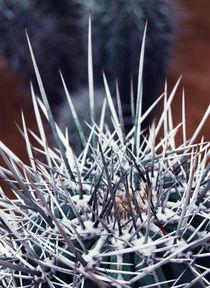 Cactus von Lina Shidlovskaya