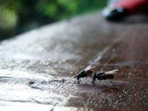 Flies by frosty383