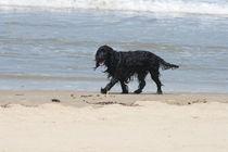 Schwarzer Hund black dog von hadot