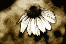 Coneflower by Kathleen Stephens