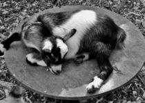 Peaceful Nap by Nick Biancardi