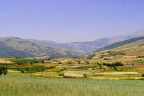 Field ready for harvest by Admir Idrizi