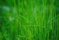 Green grass von Admir Idrizi