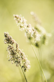 Blooming hays 2 by Kristiina  Hillerström