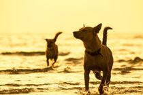 Dogs von Kristiina  Hillerström