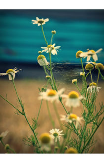 Vernetzt mit Blume  von Bastian  Kienitz