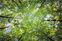 Tree Tops - natural light by olgasart