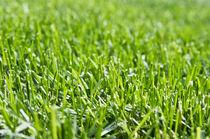 Green Grass von olgasart
