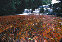 Jasper Falls, Full view, Canaima National Park by Raul Sojo