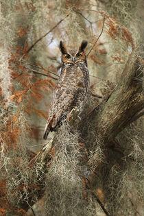 Great Horned Owl von bia-birdimagency