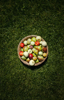 A Fruit Basket on the Grass by olgasart