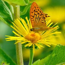 Schmetterling trifft Blume von Daniela  Skrzypczak