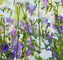 Blumenwiese von Daniela  Skrzypczak