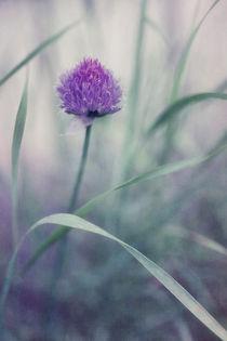 flowering chive von Priska  Wettstein