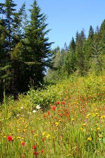 Kanadische Bergwiese von mellieha