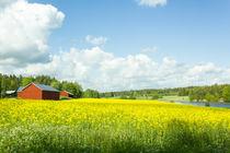 Rypsipelto - Rapeseed field von Kristiina  Hillerström
