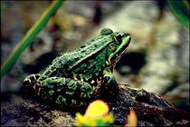 Frog-Portrait von Christoph Ehleben