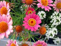 Flower power von Miroslava Andric