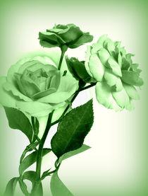 Rose (green) by Kerstin Runge