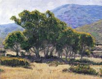 Eucalyptus Grove Catalina by Randy Sprout