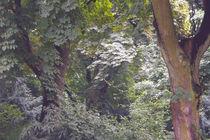 Blattwerk und Licht von lorenzo-fp