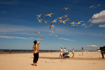 Seagulls at the beach by dreamtours