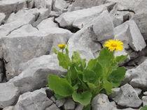 Life amidst Rocks by Bjoern Buxbaum-Conradi