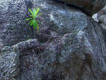 Green Hope by Bjoern Buxbaum-Conradi
