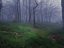 Enchanted Forest by Bjoern Buxbaum-Conradi