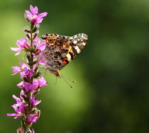 Butterfly Field by Paul Slebodnick