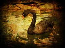 Black Swan von Paul Slebodnick
