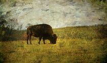Last Buffalo  by Paul Slebodnick