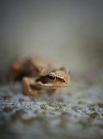 Little frog von Maria Inden
