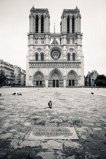 Notre Dame von Daniel Zrno