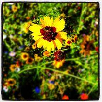 flowers von Matthias Hennig