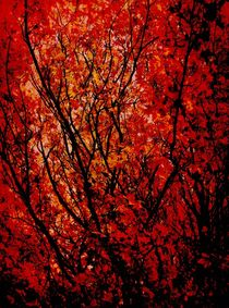 Autumn. by rosanna zavanaiu