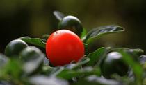 Früchte von Wolfgang Dufner