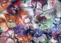 Sommerblüten von Ulrike Kröll
